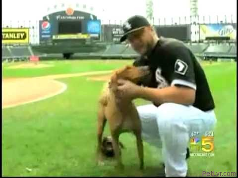 NBC-5 News Talks About Adopt-a-Pet.com Campaign with Mark & Jamie Buehrle