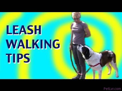 No Pulling!: Clicker Dog Training