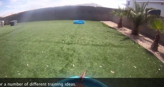 No swimming pool? Try this 'cool' training for your dog!