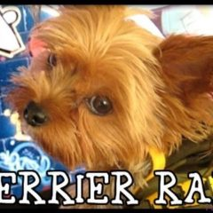 OMG! Cutest Singing Puppy EVER!!! Terrier Rap