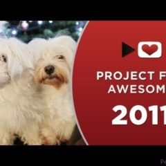 P4A PROJECT FOR AWESOME: PAWS Animal Rescue