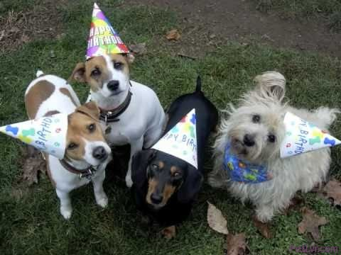 ❤♫❤♫❤ Party Animals! Pets Partying! ❤♫❤♫❤