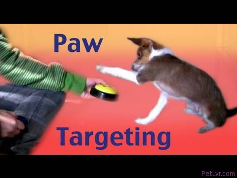 Paw Targeting – how to teach tricks dog training clicker training