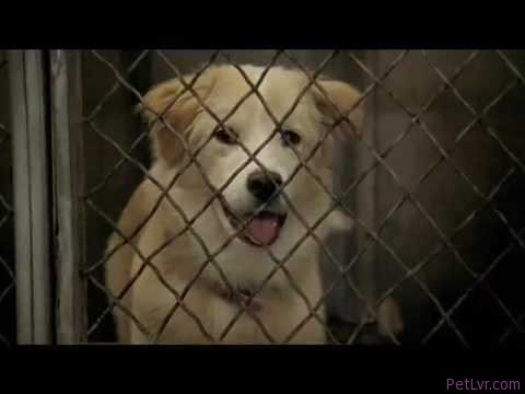 Pedigree Commercial – Echo