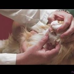 Pet Care : How to Treat a Cat Bite
