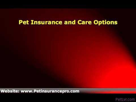 Pet Health Care in UK | Because they need the love and care from us