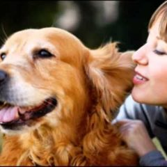 Pet health especially for your cat and dog