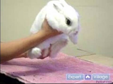 Pet Rabbit Care : Picking Up Your Pet Rabbit