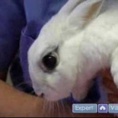 Pet Rabbit Care : Signs Your Pet Rabbit is Healthy