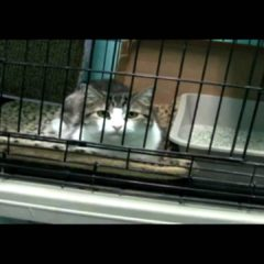 Pet Rescue of Larchmont: 2009 Highlights
