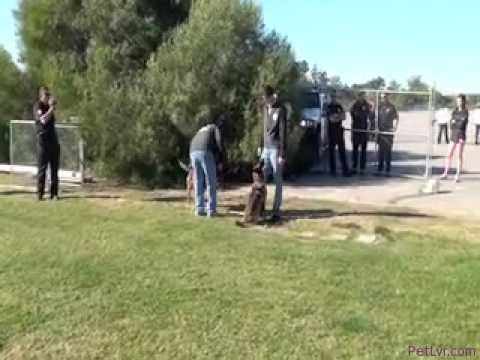 POLICE DOG TRAINING – HITS/LAPD