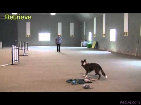 """Positive"" Dog Training sgda"