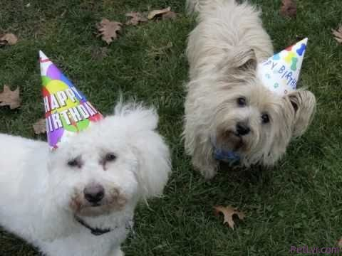 ★Puppies Party in the USA!★