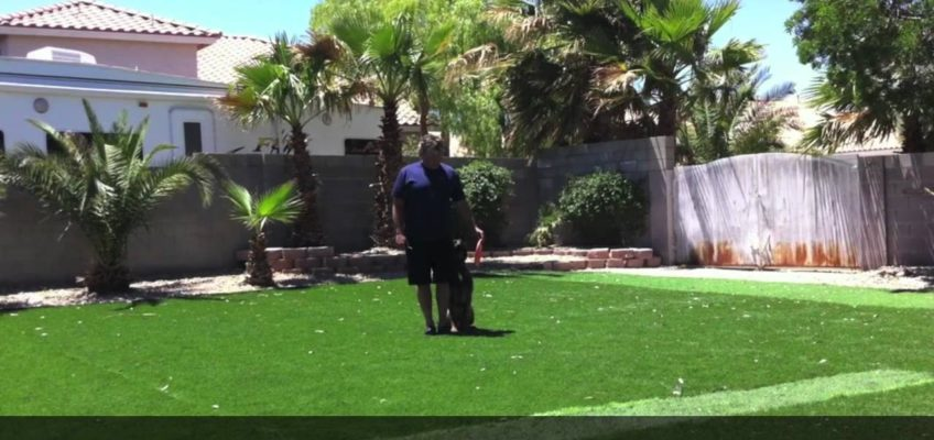 Remote dog placeboard target training with frisbee.