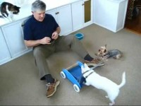 Rick Caran's Dog Training Tips With Jilli Dog – Let the Good Times Roll
