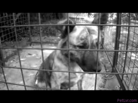 Saddest dog video EVER… Adopt or foster a dog from your local pound today…
