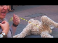 SCARY Dog attacks crowd!