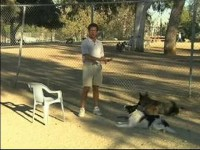 Service Dog Training Tips : Service Dog Training to Learn How to React to Distractions