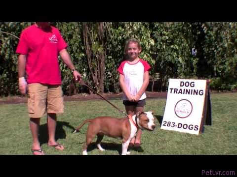 Sit Means Sit Dog Training Video 8 Yr old Celia shares a few tips on meeting a new dog