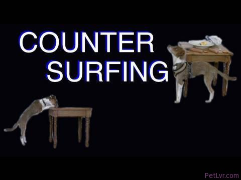 Solving Counter Surfing- Clicker Dog Training