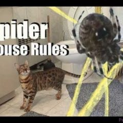 Spider House Rules — Cat Clips #148