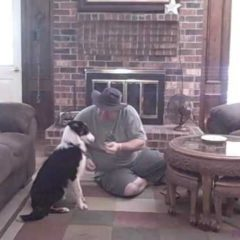 Tale of Mo 7: Dog training tips , Border Collie Rescue
