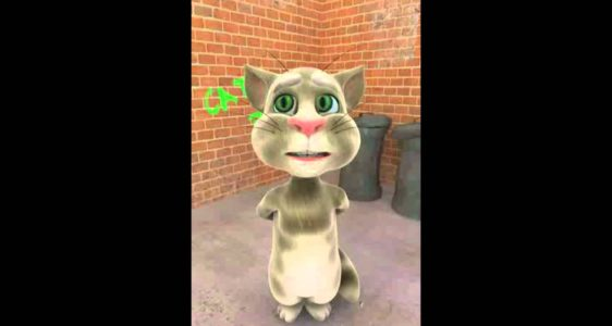 Talking Tom about Dr. Mathew Rock DVM