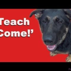 Teach Come: Dog Training Clicker