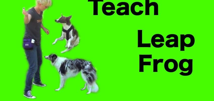 Teaching Leap Frog- clicker dog training