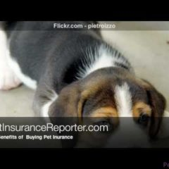 The Benefits Of Buying Pet Insurance For Your Furry Friend