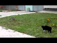 The Dog, the Cat, and the Ugly. Epic fight, Western style! (ORIGINAL remix, l8r 2b stolen!)
