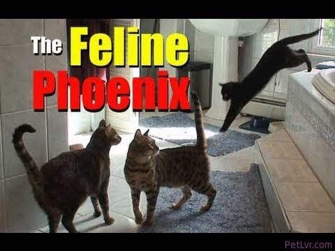 The Feline Phoenix — Cat Clips #143