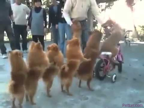 The funniest dog video ever