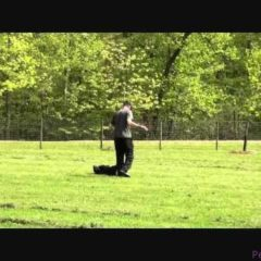 Titan (Great Dane) Boot Camp Dog Training demonstration