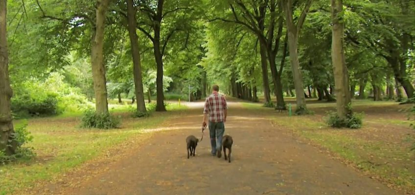 Training your dog to heel on a loose leash: Dog training In London (HD)