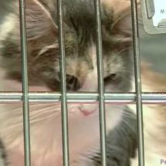 Wash. Animal Rescue League: An Animal Shelter Like No Other