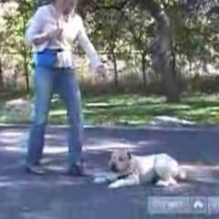 Wheaten Terriers: How to Teach Your Dog: Obedience Training Tips & Tricks : How to Teach Your Wheaten Terrier to Lay Down Using These Dog Obedience Training Tips