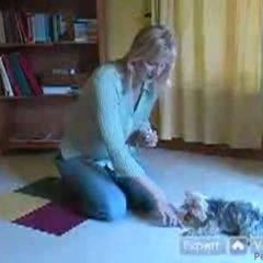 Yorkies: How to Teach Your Dog: Obedience Training Tips for Yorkshire Terriers : How to Teach Your Yorkie to Stay With These Dog Obedience Tips for Yorkshire Terriers
