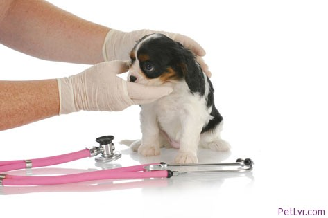 Symptoms of Kennel Cough and How to Prevent