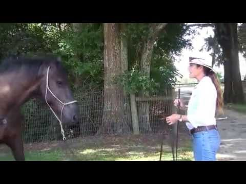Ask the Expert: How to Train a Spooky and Unpredictable Horse, Part II