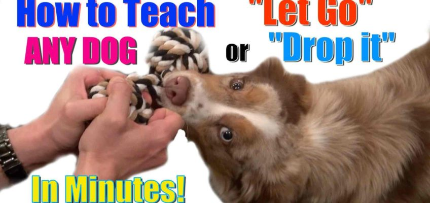 How to Train your Dog Without Force: Stop Puppy Biting, Pay Attention and Train Smarter!