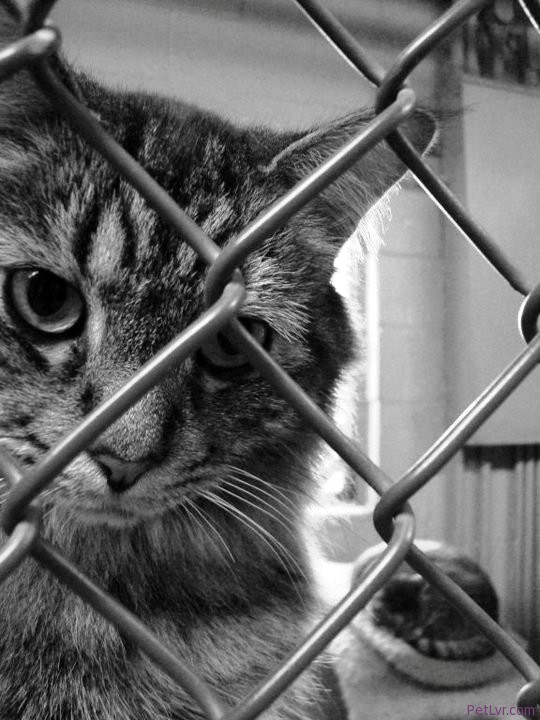 Tips for Rescuing Dogs and Cats Abandoned in Foreclosed Homes