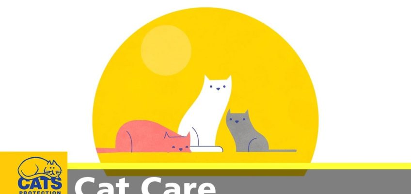 Cool for cats: how to keep your cat cool in Summer