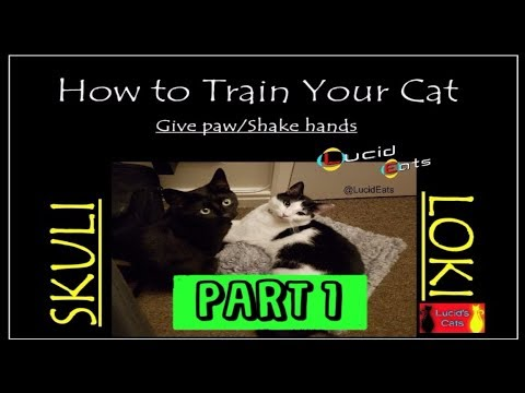 How to train your cat – shake hands, high 5, low 5