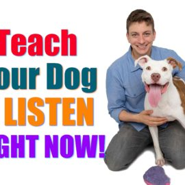 """How to Teach Your Puppy to ACTUALLY Listen to You When it Counts! (Real Life """"Leave It"""" Explained!)"""