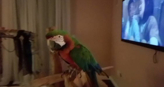 How to Potty Train your Parrot | PARRONT TIP TUESDAY
