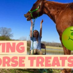 TRICKS TO TEACH YOUR HORSE!!