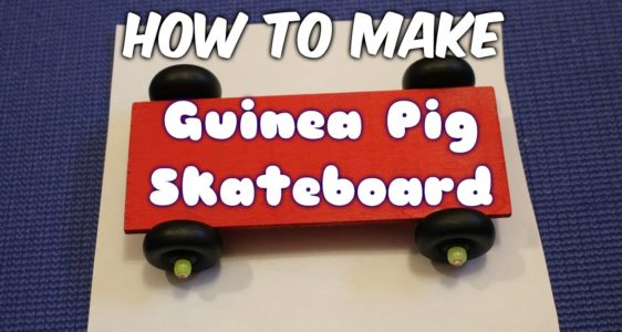 How To Train A Rat To Skateboard