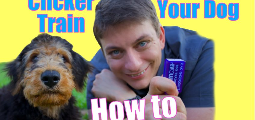 """How to Teach Your Dog to Roll Over and """"Play Dead"""" FAST!"""