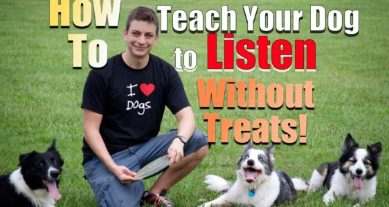 How to Teach Your Dog Sit, Down, Up and Stand in MINUTES!